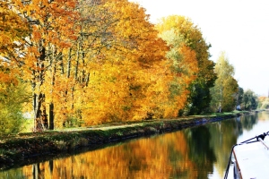 Stunning surprises left for us as sunshine appears and the banks sparkle with autumn colours.
