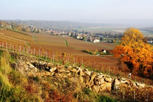 View across the vineyards at Nanteuil-sur-Marne.