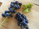 Grapes from vine and supermarket