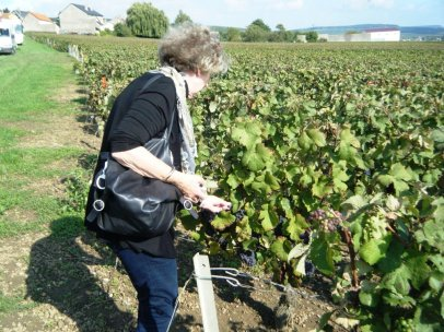 Janie picking (stealing!) grapes.