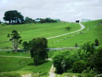 Hill country en route to Kaipara Harbour3