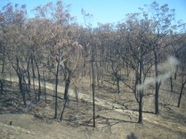 There had been fires along the railway line Goulburn to Sydney, but happily all over now.